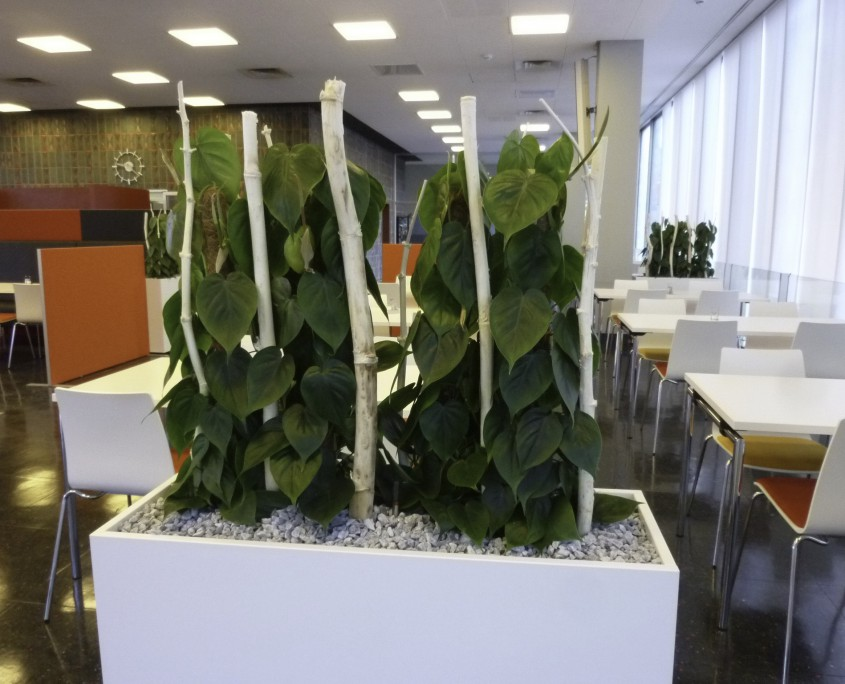 Landratsamt Karlsruhe Kantinen Pflanzen